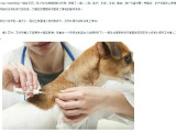 动物电子芯片 宠物电子芯片 畜牧电子耳标