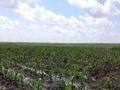 低价转让达州周边农业工业土地