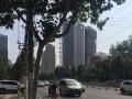 正荣彩虹谷西北妇幼旁大型商业综合体客流量大