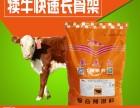 滄州市牛飼料供應商 肉牛專用預混料 優質生產廠家