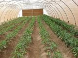 冬暖棚/鸿盛温室/大棚厂家/高端温室/蔬菜种类/温室供应商/大棚