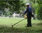 修剪草坪 绿化养护保养经验丰富专业美吉亚环保公司专业认证