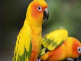 台州三门本地出售观赏鸟健康保障