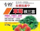 您还在担心草莓根腐病草莓肥害黑根沤根红中柱根腐病吗