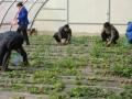 邯郸团体公司单位户外露营,采摘草莓亲子活动户外烧烤全都有!