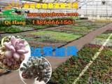 智能温室更符合智慧农业的发展