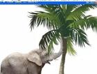 视觉传达VI专业:ps合成椰树大象