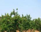 永仁100亩果园养殖基地低价出售