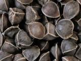 辣木籽多少钱一斤,辣木籽功效吃法有哪些