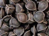 野生辣木籽价格一斤多少钱,辣木籽的功效吃法