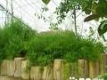 水泥制作仿木,藤架,凉亭,栏杆。假山,假