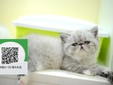 杭州哪里有宠物猫出售,杭州哪里有卖纯种加菲猫价格