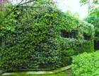 植物墙生态绿化环保节能美化环境
