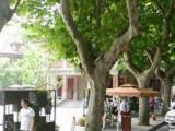 长乐路锦江饭店周边不多见的便宜商铺