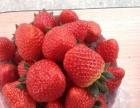 小唐草莓采摘园