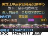 金手指农中盘广东运营中心广东国银诚招会员以及代理