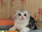 猫舍出售各种高品质猫咪 疫苗齐全 包健康纯种签协议