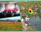 深圳乐湖生态园真的是值得一来的特色农庄团建野炊活动基地