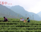 白茶 乌龙茶 绿茶红茶大红袍铁观音批发市场