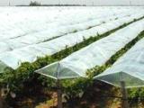 淄博优惠的专用膜哪有卖葡萄专用膜厂家