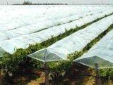 供应淄博优质的专用膜 葡萄专用膜生产厂家