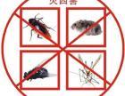 灭蟑螂老鼠蚊蝇等各类害虫 二次供水清水箱洗消毒