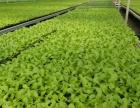 微生物育苗基质(营养土)