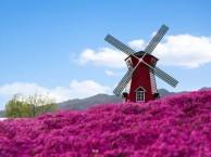 在春暖花开的季节,到雨花谷赴一场花的期约