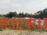 华阳湖拓展 团建 亲子 烧烤 野炊 cs