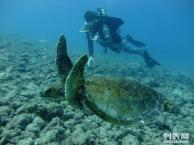塞班皇家国际旅游社2016塞班岛蜜月旅行