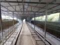 出售七星关大型兔子养殖场