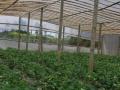 吉地10亩出租只可以种植养植可分租