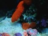 全套生物加设备海水鱼缸出售