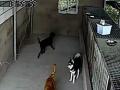 0791爱宠南昌最专业的宠物寄养