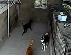 0791爱宠南昌较专业的宠物寄养