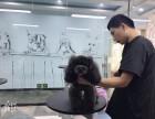 菏泽宠物美容教学 菏泽最好的宠物美容培训 菏泽宠物美容班