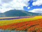 重庆周边一日游景点 凤凰花海+秀湖公园+湿地公园一日游