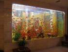 福州清洗鱼缸,景致护理鱼草养护鱼缸保养鱼缸维修