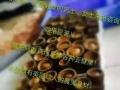 绿竹竹罐调理减肥加盟