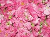 大马革士玫瑰纯露加工生产/大马革士玫瑰纯露加工设计