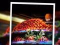 郑州裕达国贸五楼自助餐卷原价458现价358