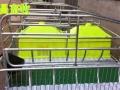 供应母猪分娩床猪产床河北世昌畜牧低价出售