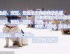 在北京办理一个石景山的美容营业执照多少费用