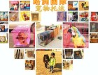上海宠物托运宠物随机托运赠送水壶代办三证等一条龙服务