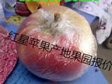 山东苹果今日批发价格多少钱一斤苹果水果网报价