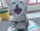 青岛本地有偿领养猫咪。机场附近。个人。