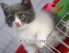 长沙市哪里有加菲猫出售 加菲猫多少钱一只
