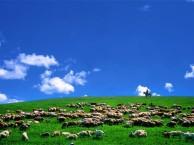 厦门到内蒙古呼伦贝尔大草原旅游攻略