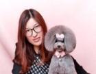 杭州爱可宠物美容学校11岁啦!