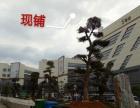 开发商售【免税现铺10-40平低价8000元返租】